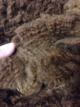 First shearing